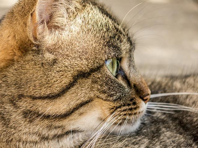 un chat possédant une puce electronique