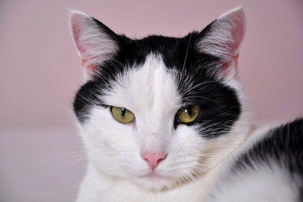 un chat qui marque son territoire