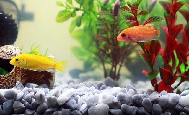 un bel aquarium