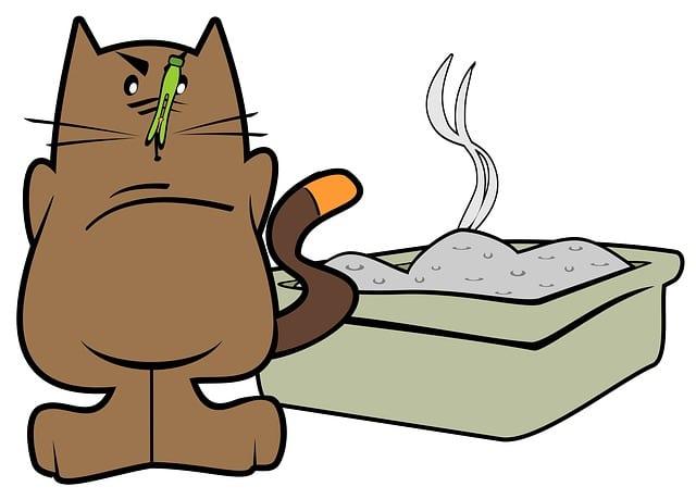 chat avec sa litiere