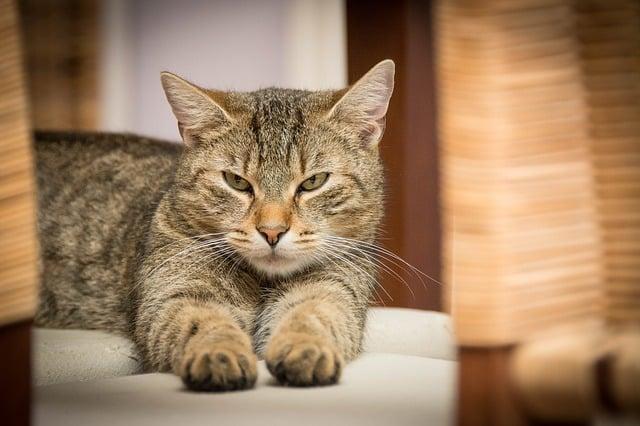 chat à domicile
