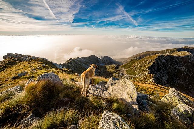 chien en montagne