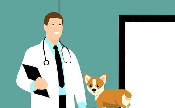 vétérinaire en dessin