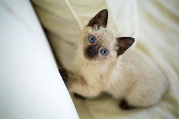 chat de race thai