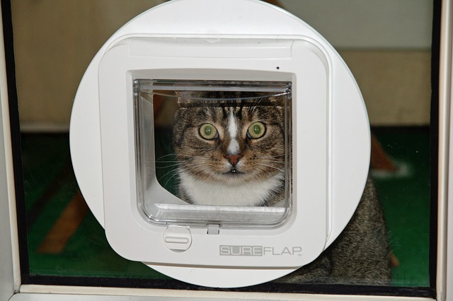 chatiere pour chat
