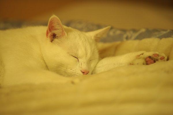 chat qui dort sur un plaid